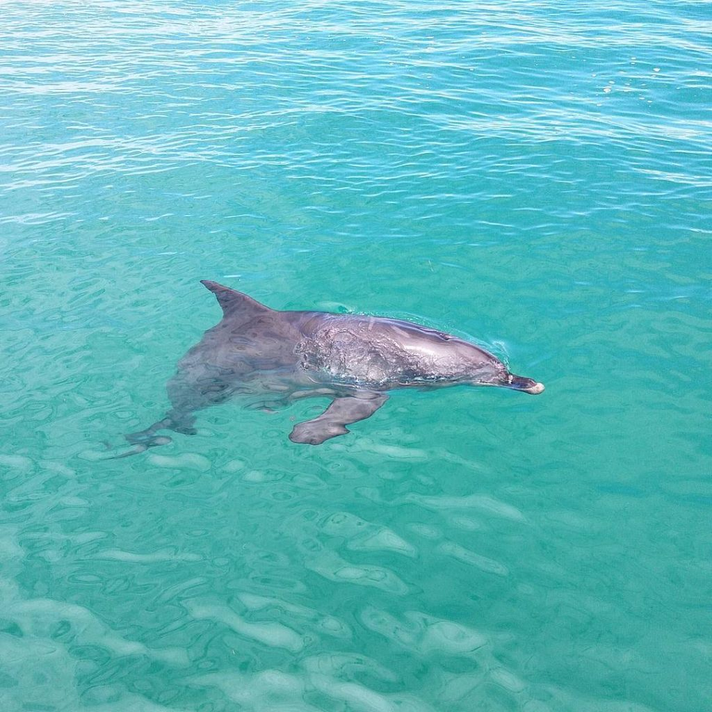 Dolphin Adventure Cruise. #sightseeingaustralia #travel #travelphotography #travelling #dolphins #penguinisland #adventure #sea #traveladdict #birthdaytrip #perth #westernaustralia