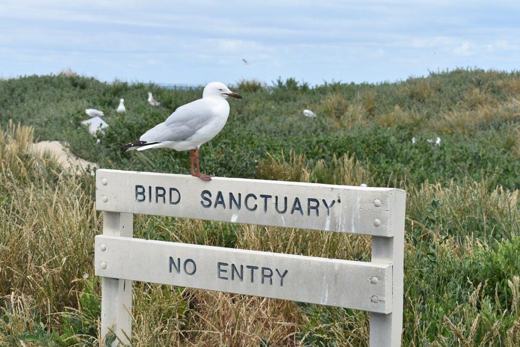 penguin_island_birdsantuary